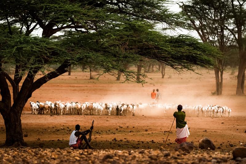 Kenia: Stammeskrieger ermodern Wild und Farmer