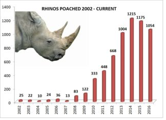 Rhino-Horn in Südafrika