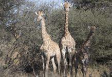Wiederbelebung des Zinave Nationalparks