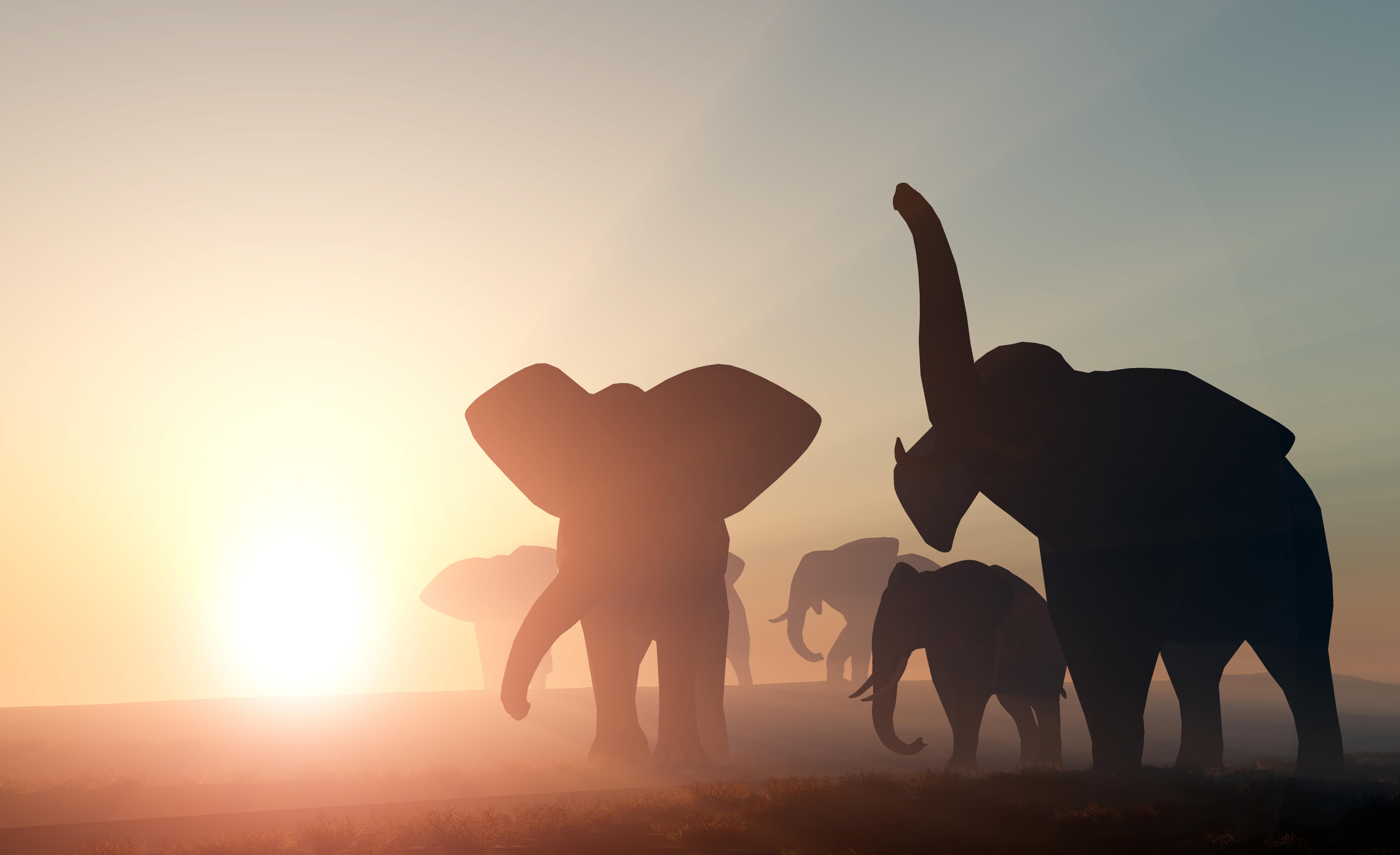 Elefantenherde zerquetscht Mann