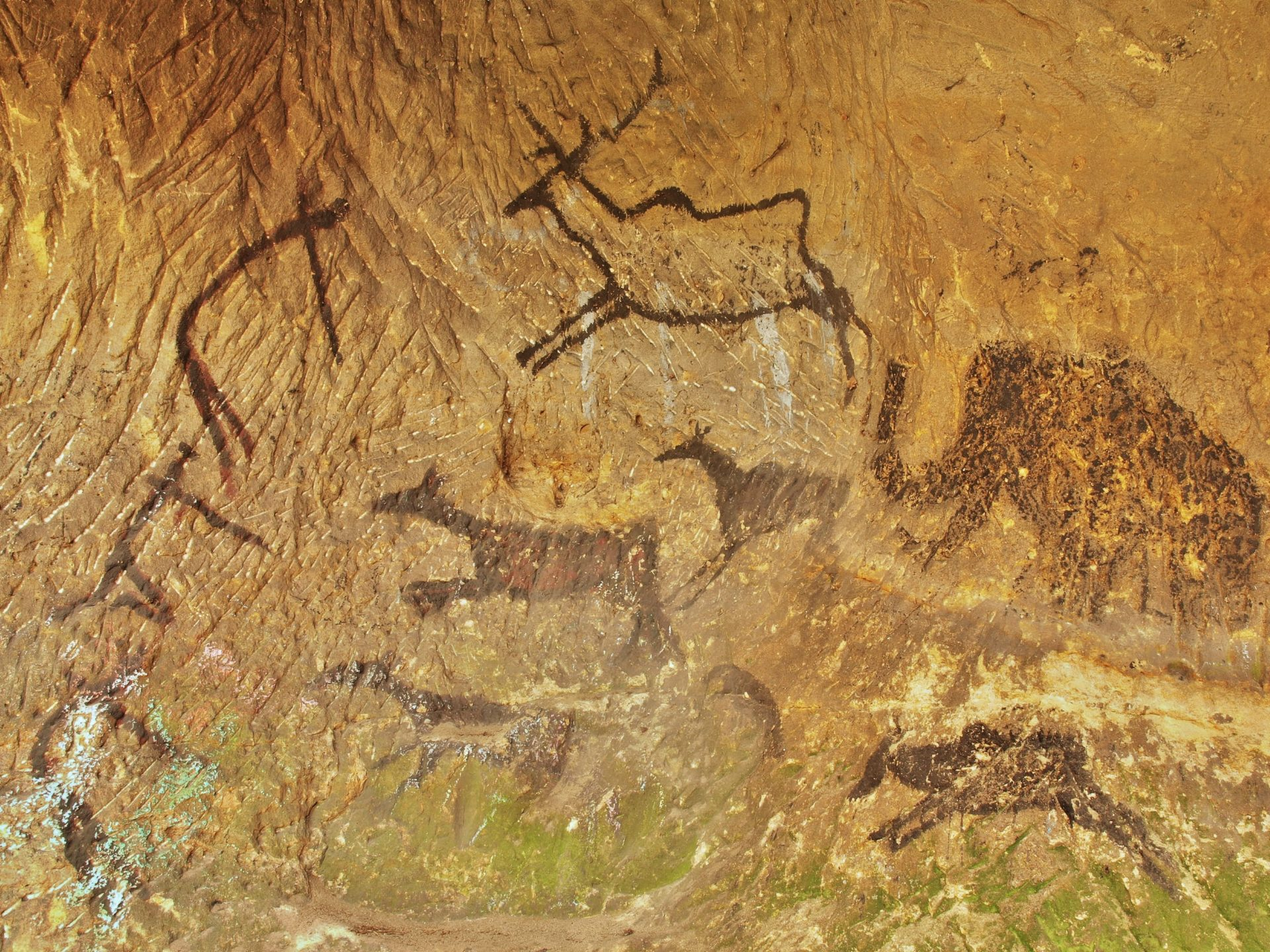 Prozent der Höhlenmalereien konzentrieren sich auf dieses Gebiet.