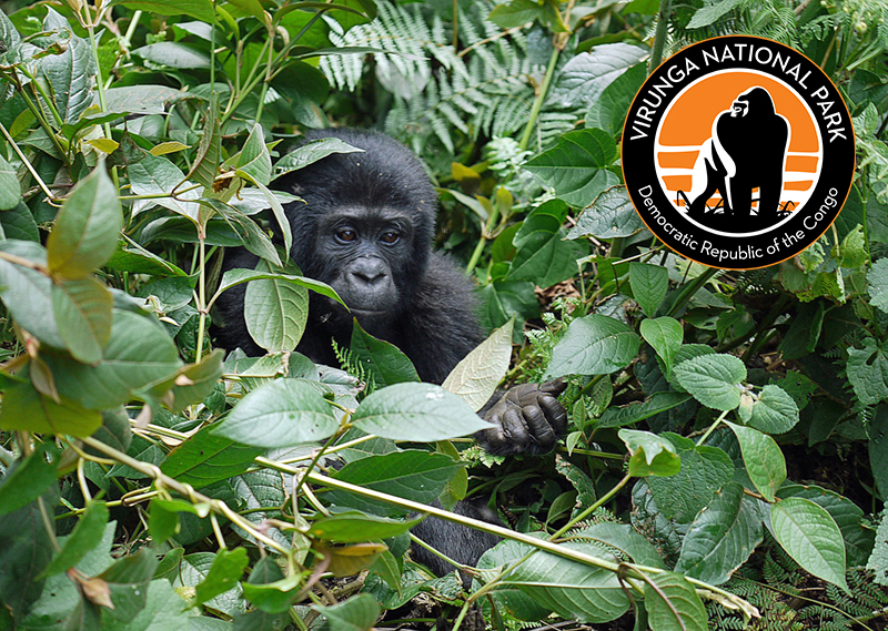 Virunga Nationalpark in der Demokratischen Republik Kongo