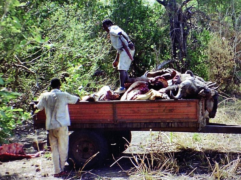 Erste Metzgerei für Wildfleisch in Tansania eröffnet