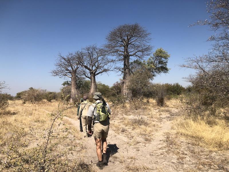 Pirschende Jäger in Namibia