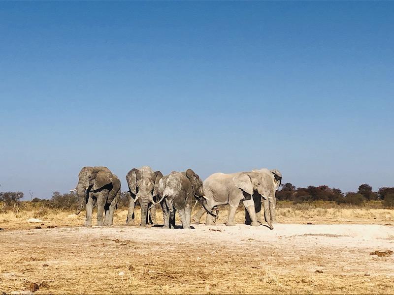 Eine Gruppe Elefanten in der Savanne