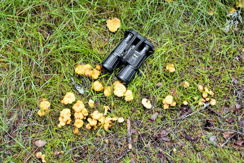 Pilze und Fernglas