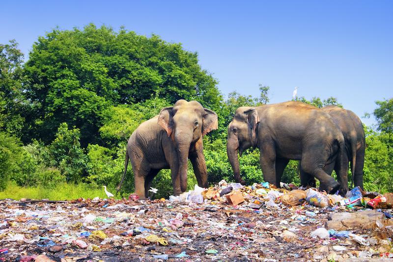 Zwei Elefanten auf einer Müllkippe